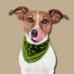Hundefutter Gratisprobe