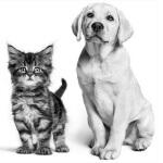 Royal Canin Gewinnspiel um Tiershooting