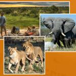 Botswana Reise gewinnen