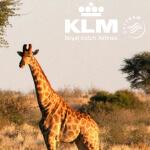 gewinne mit KLM